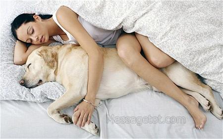 Không nên ôm thú cưng khi ngủ